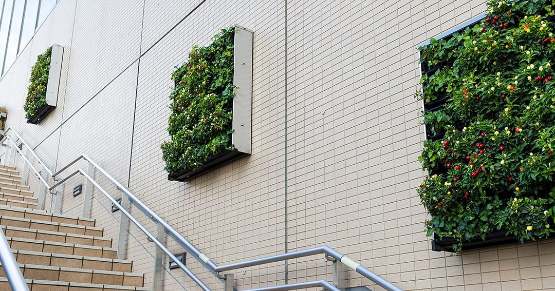 Don't Choose A Living Wall Until You've Read This