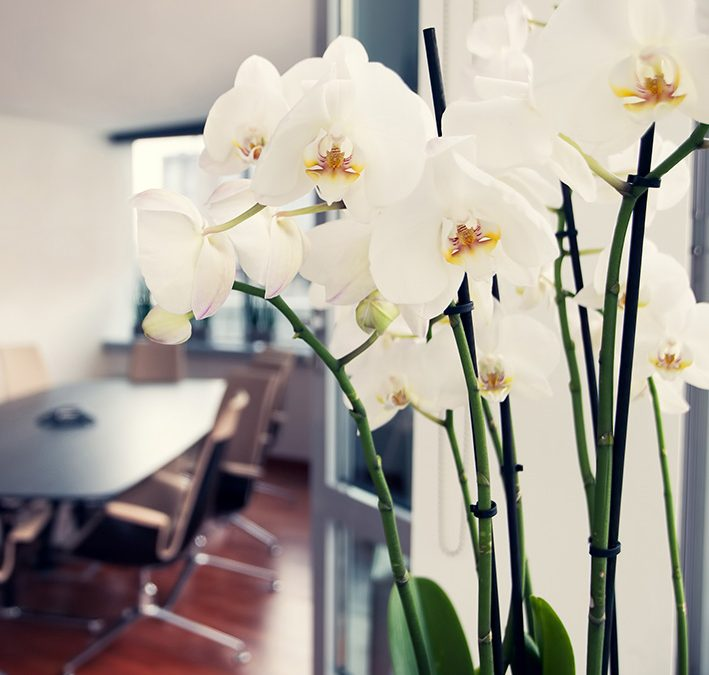 Can Flowers Win Us Business?