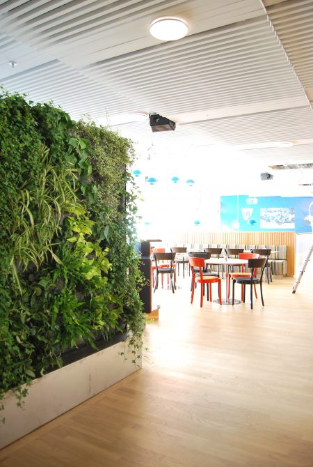 Internal living walls, also known as green walls