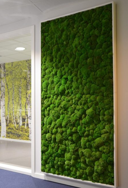 A beautiful living wall installed by the experts