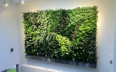 Improve Your Air Quality  – Get Your Living Wall