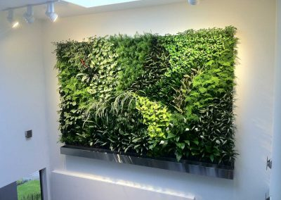 Living walls from Aztec