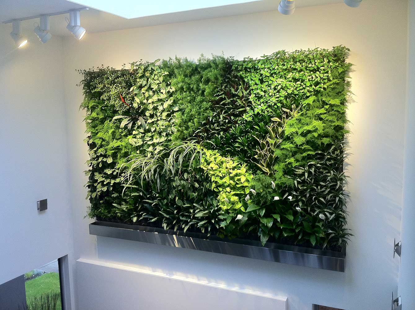 Great Living Walls Living Walls | Aztec Plants