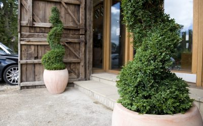 Buxus Sempervirens – The Versatile Solution