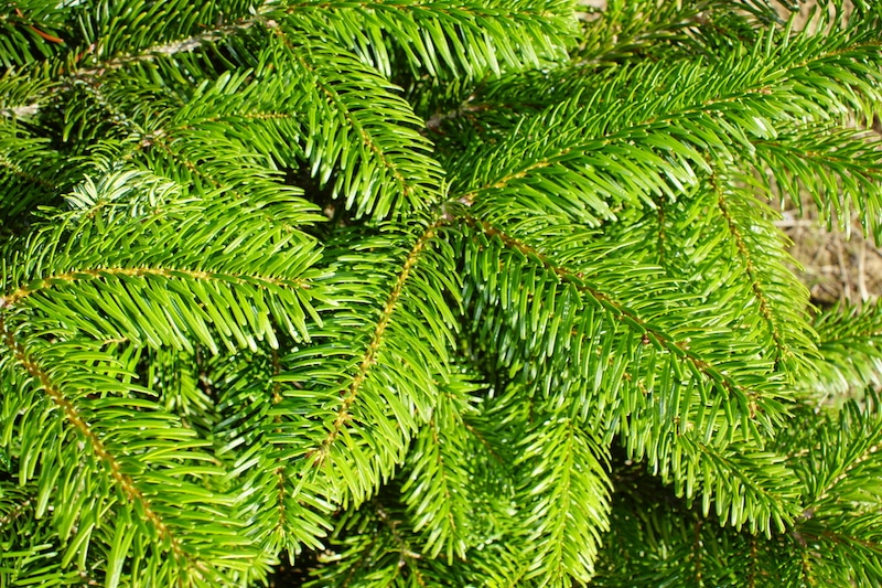 Real or Artificial – Which Christmas Trees Are Greener?