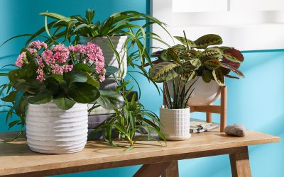 Working From Home – How Plants Can Help